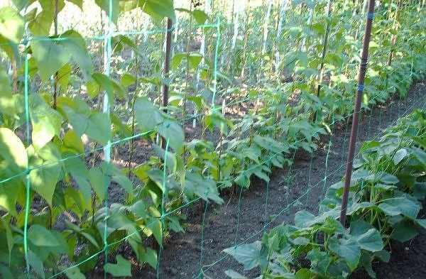 Plasa plante cataratoare 2x25 m