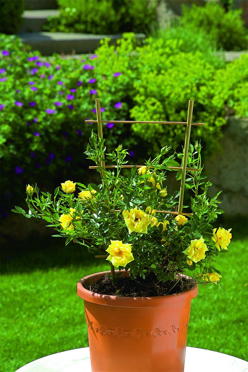 Spalier din bambus pentru plante la ghiveci, 28 x h 60 cm